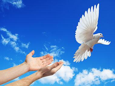 dove_release